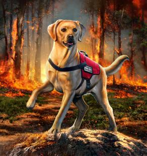 RescueDog1_WEB
