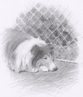 From Lassie (4)