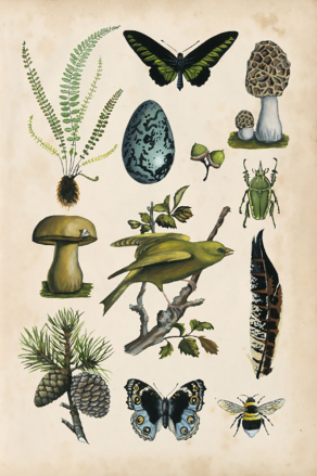 Naturalist's Collection