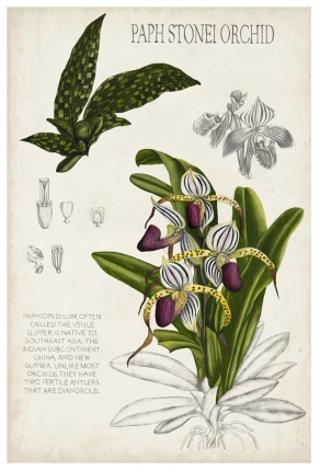 109205Z Orchid Field Notes I