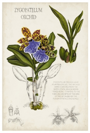 109206Z Orchid Field Notes II