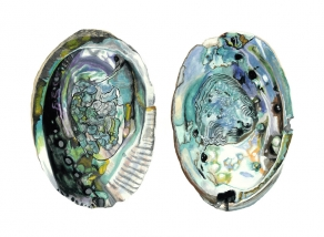 150726Z Abalone Shells I
