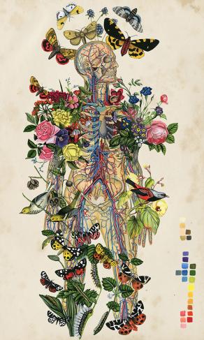 Anatomical-Botanical-Thicket