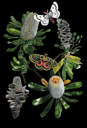Banksia-Chart