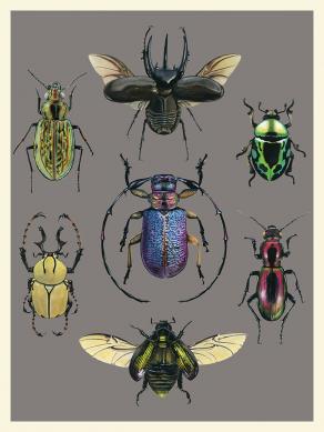 Beetles-Chart