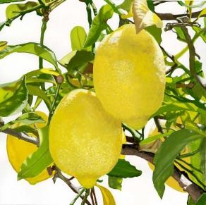 Lemons I
