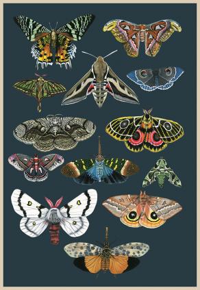 Moths-and-Lanternflies