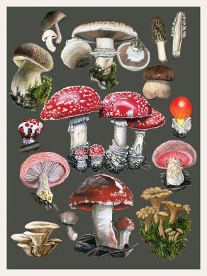 Mushroom-chart-combined
