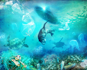 A-Plea-for-the-Animals-Oceans