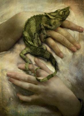 Lizard-copy