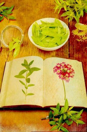 The Secret Language of Herbs Verbena
